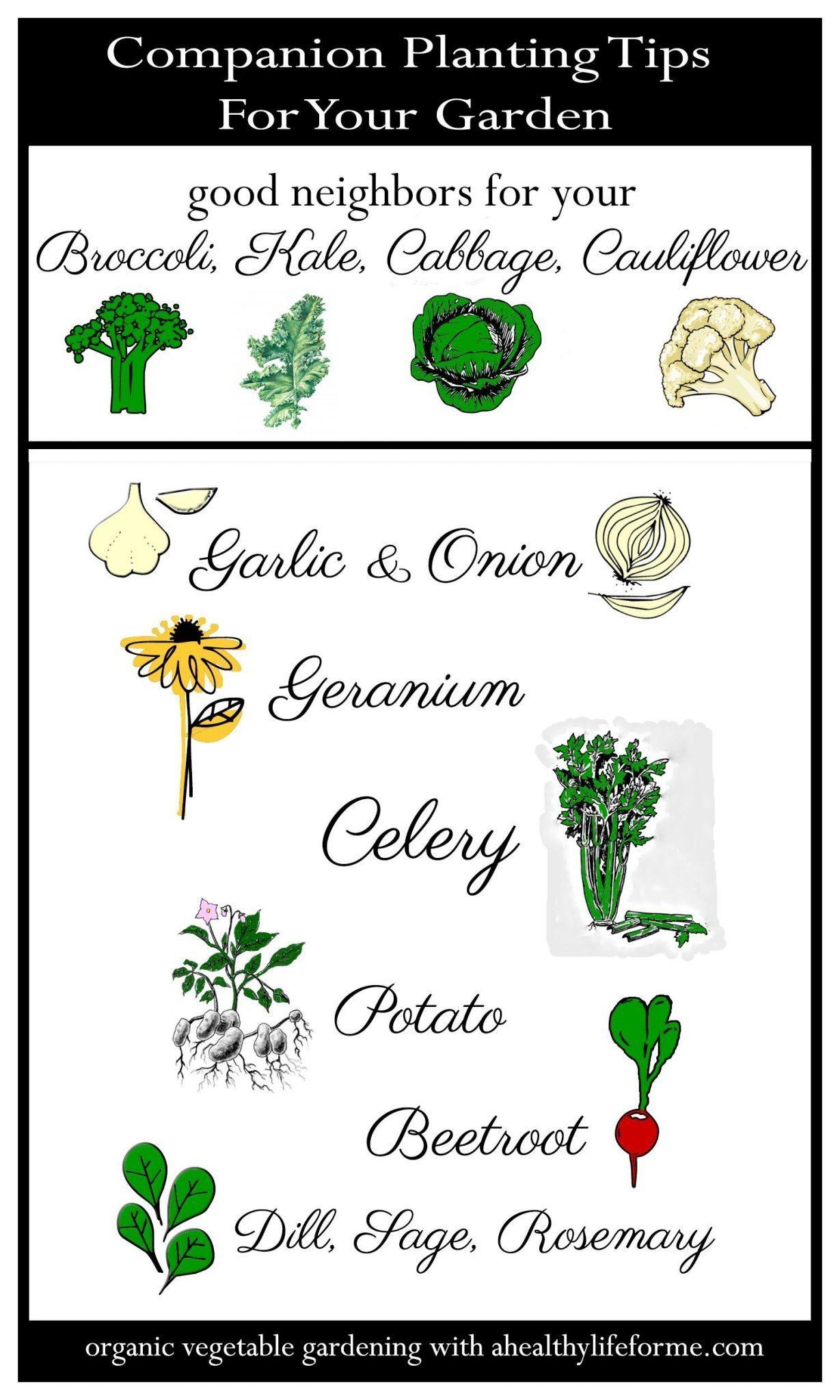Companion Planting Tips for Cruciferous Vegetables - A ... Companion Planting Kale
